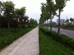 潍fang市永安路绿化工程